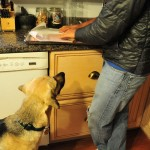 Dehydrated Turkey Treat Recipe - Prepare For Begging